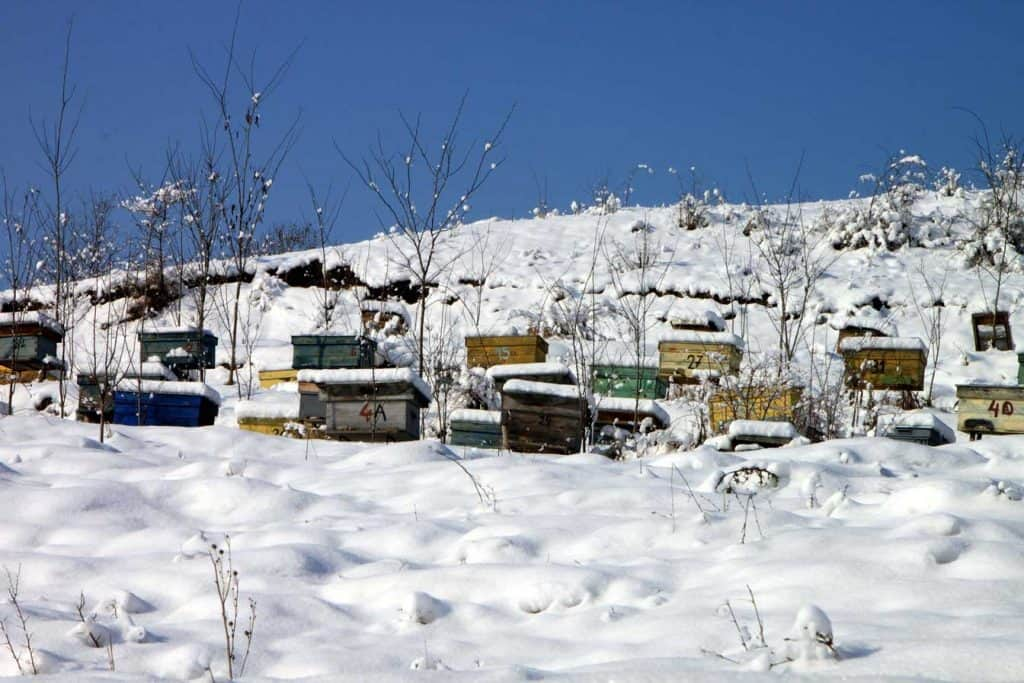 beehives in the snow