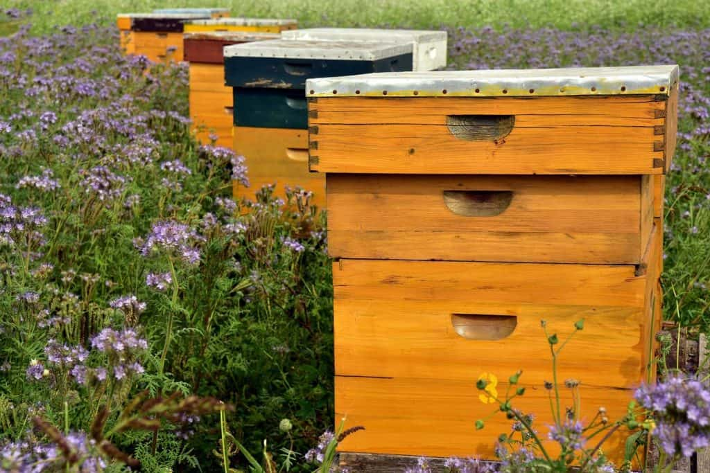 How Many Brood Boxes Should I Have -beehives in a field