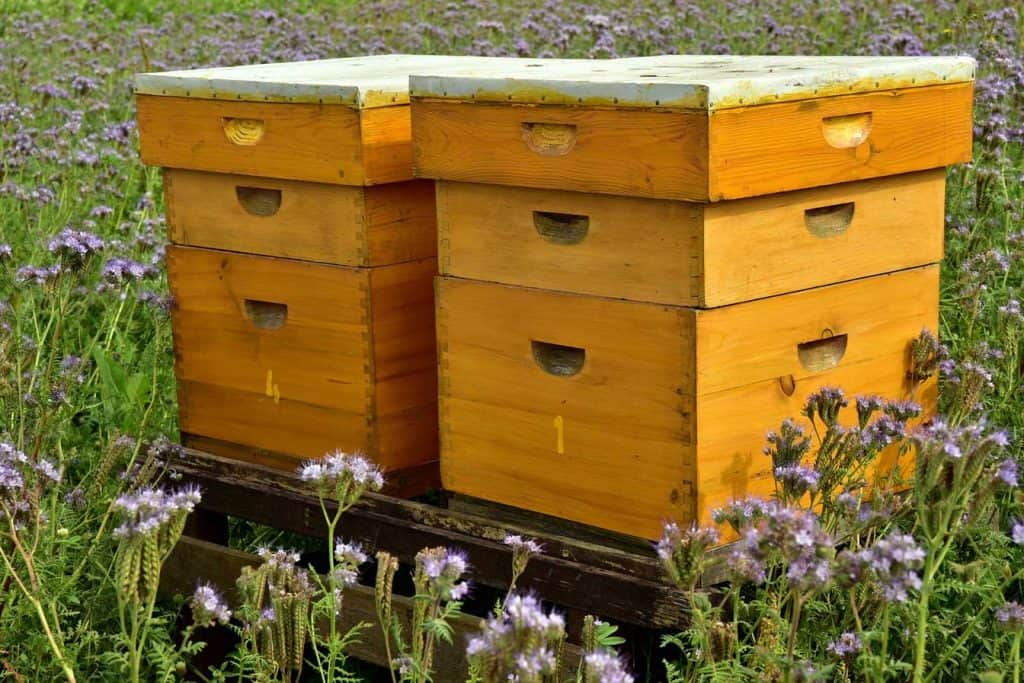 2 beehives in a field