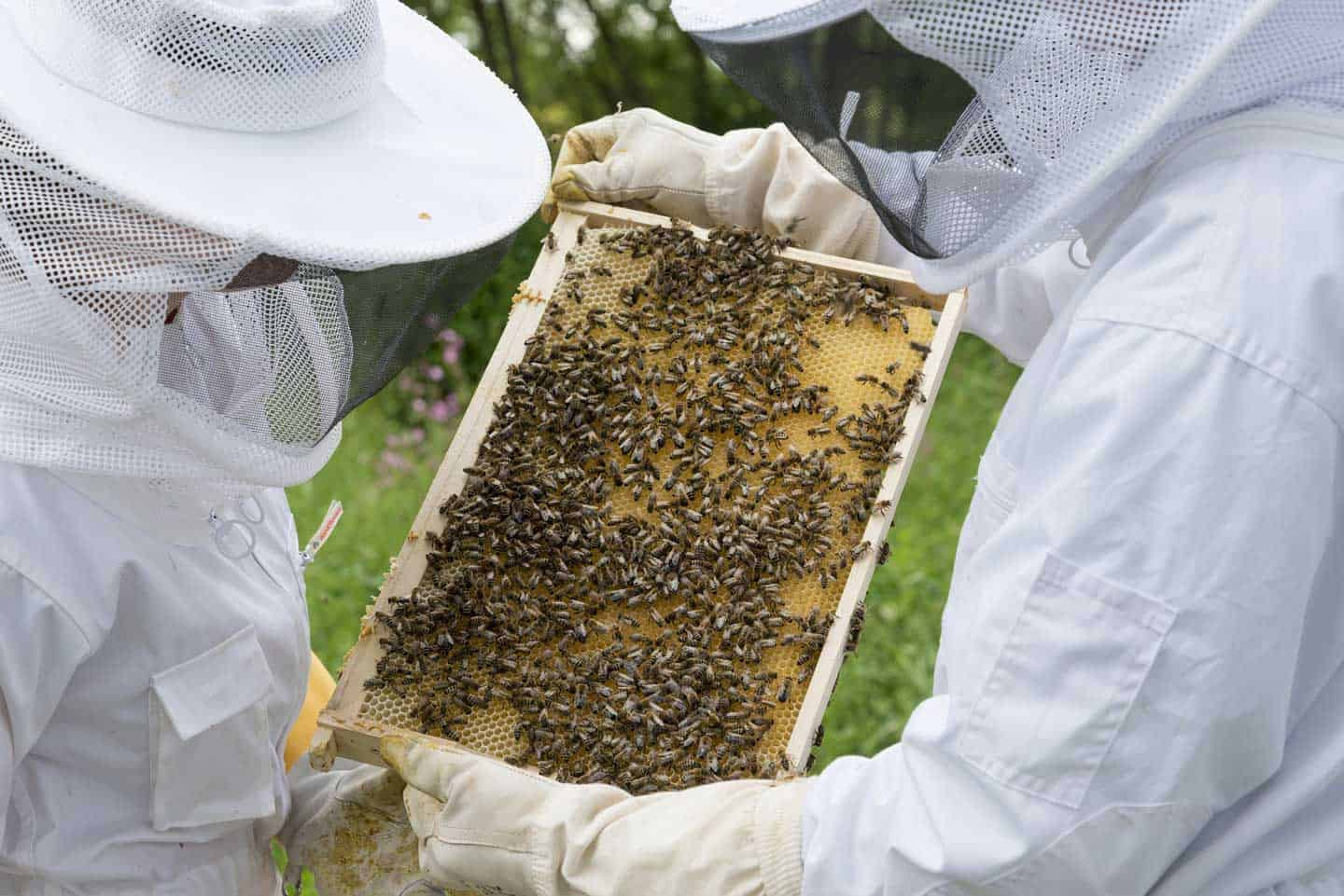 2 beekeepers holding frame