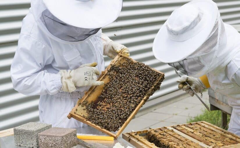 beekeepers inspecting frames